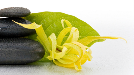 Hydratačný a výživný krém s Ylang-Ylang